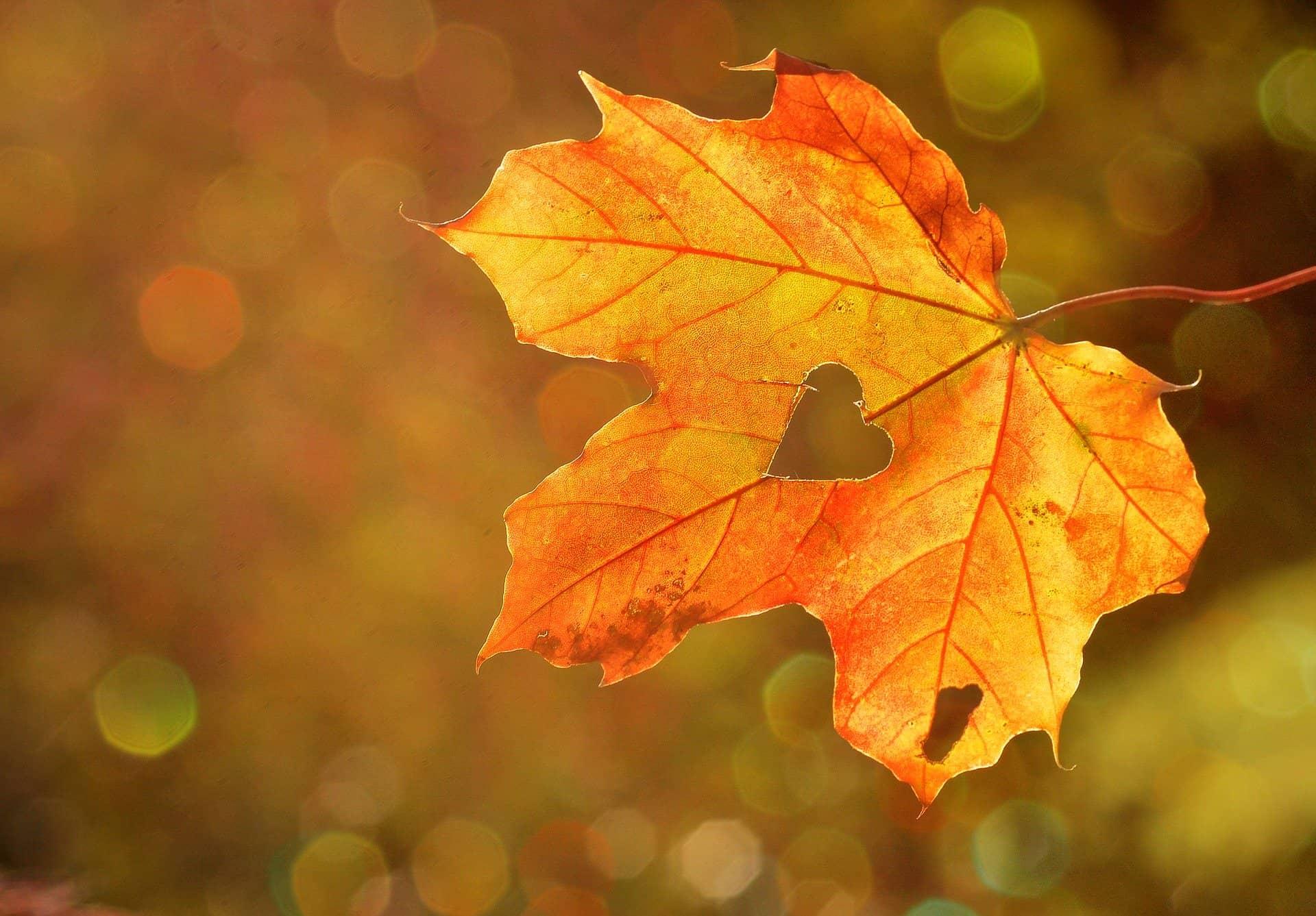 ein Herbstblatt